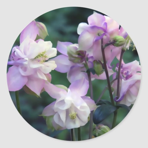 Columbine Floral And Gifts: Pink Purple Columbine Flowers Classic Round Sticker