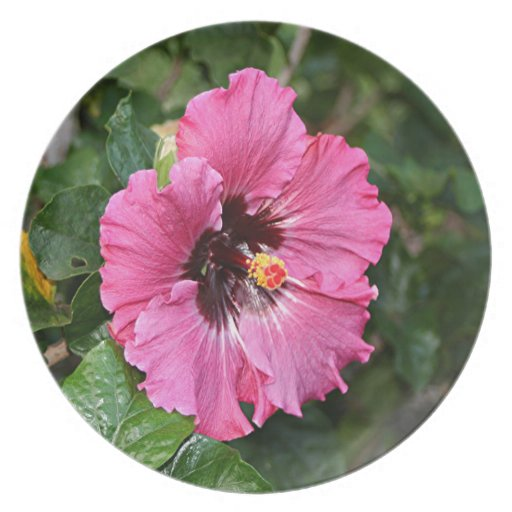 tag pink hibiscus flower - photo #6