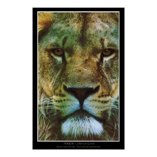 """""""PRIDE"""" African Lion Poster Print"""