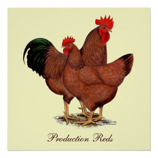 Production Red Chickens Posters | Zazzle
