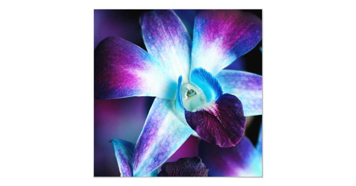 Blue Orchid Wedding Invitations: Purple & Blue Dendrobium Orchid Customized Orchids Card
