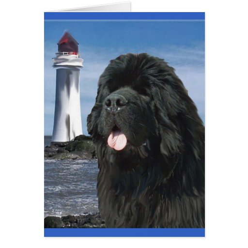 Rainbow Bridge Newfoundland dog Greeting Card   Zazzle