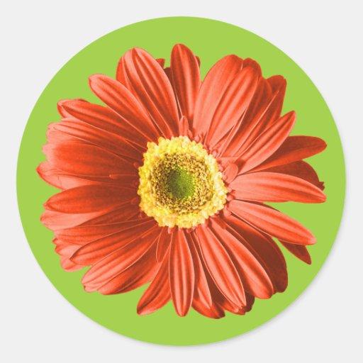 Red Daisy Flower Classic Round Sticker