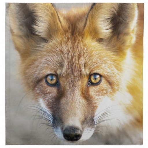 Red Fox Face, Close-up Cloth Napkin   Zazzle