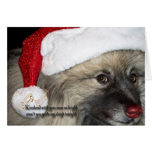 Red Nose Keeshond Christmas card | Zazzle
