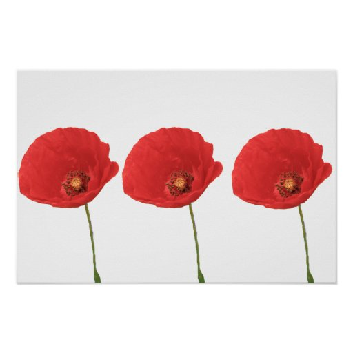 Red Poppies Poster Print