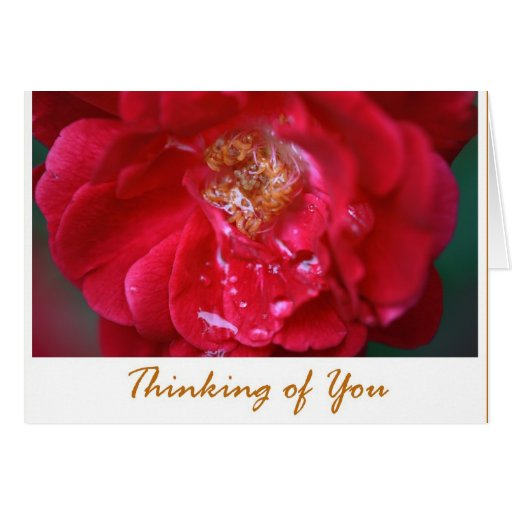 """Red Rose, """"Thinking of You"""", Blank Inside Card 