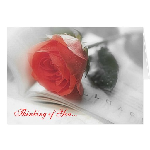 Red Rose - Thinking of You Card | Zazzle