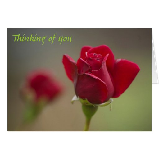 Red Rose Thinking of you Greeting Card | Zazzle