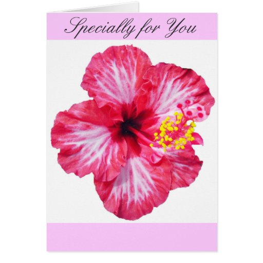 red white pink hibiscus aloha flower cards | Zazzle