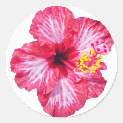 red white pink hibiscus aloha flower round sticker | Zazzle