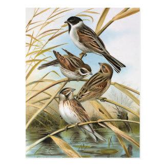 Vintage Bird Postcard 68