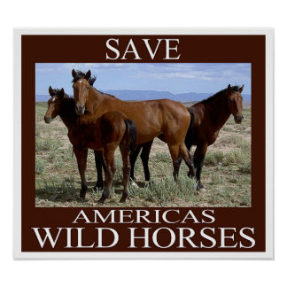 Wild Horses: Please Comment on BLM's Disastrous Plans to Study and Spay White Mountain Mares