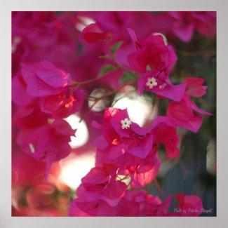 Scarlet flower posters