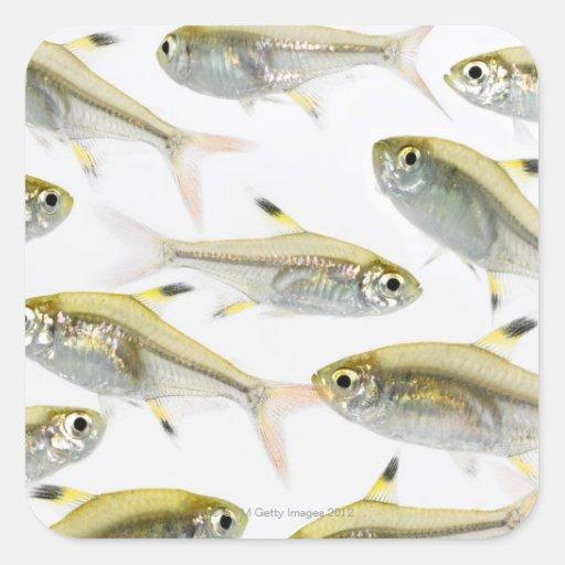 X Ray Fish Craft