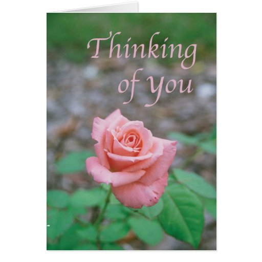 """Scripture card -- """"Thinking of you"""" with rose 