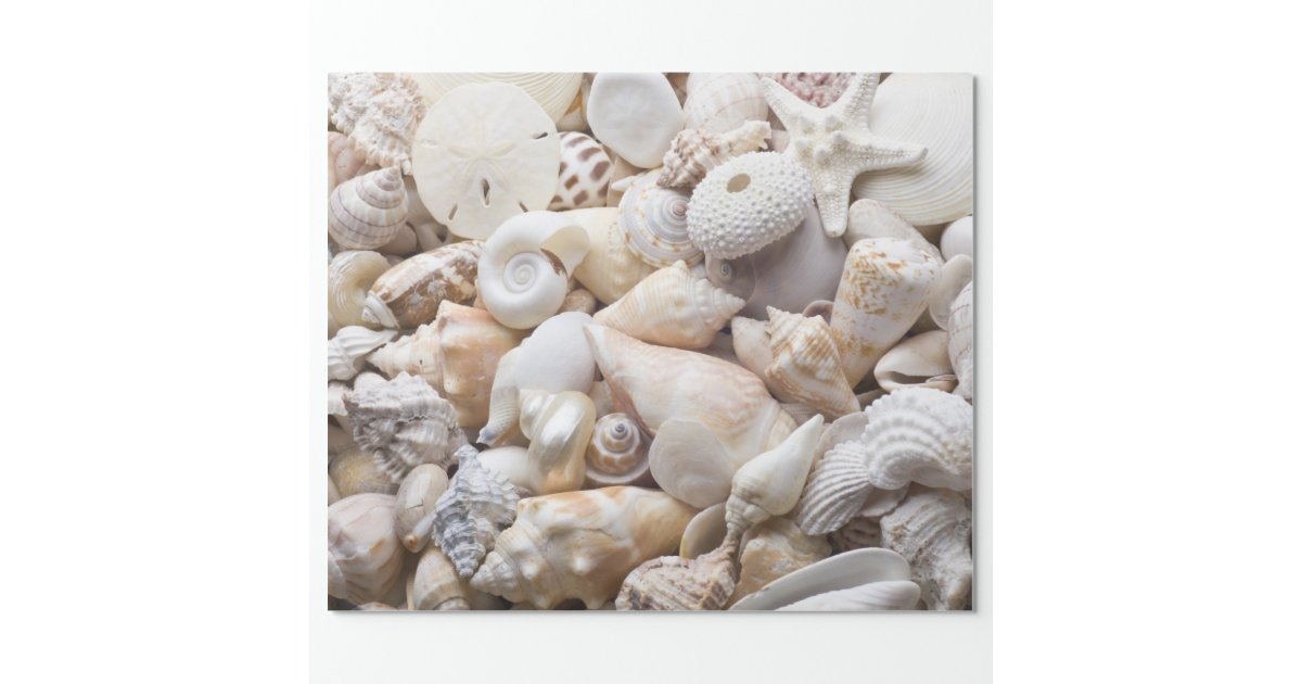 Sea Shell Amp Starfish Background Beach Shells Wrapping