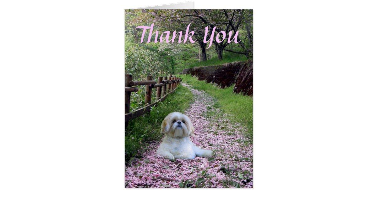Shih Tzu Thank You Card Zazzle