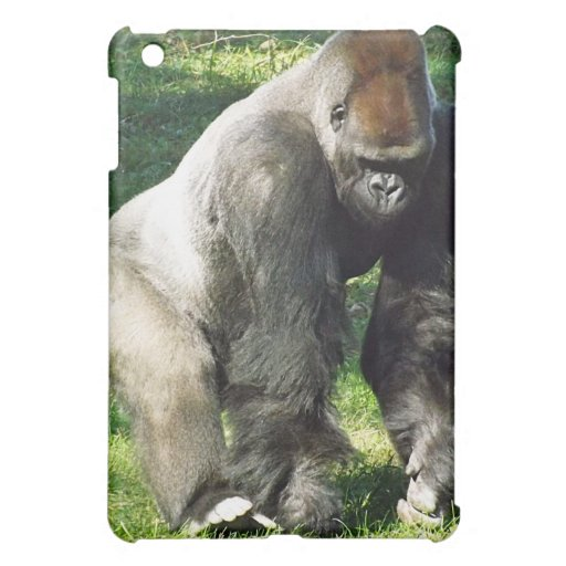 Gorilla standing up - photo#38