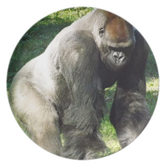 Gorilla standing up - photo#40