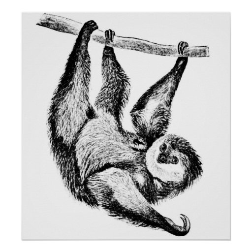 Sloth Drawing Illustration Poster   Zazzle