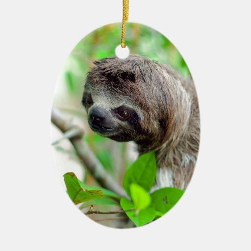 Sloth In Tree Nicaragua Christmas Tree Ornaments