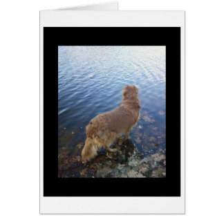 Dogs Leave Pawprints Gifts On Zazzle