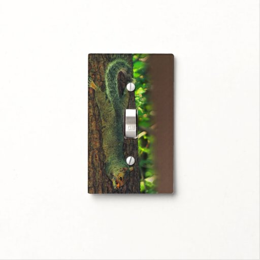 Light Pole Nut Covers: Squirrel Eating Nut On Tree Nature Light Switch Cover