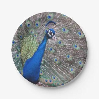 Paper Plate Fingerprint Peacock Kids Craft