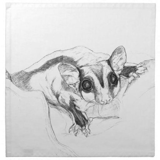 Sugar Glider Drawing Sketch Cloth Napkin Zazzle