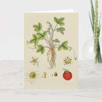 Folded Greeting Card