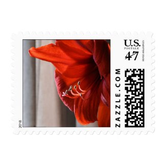 Red Lion Amaryllis Flower Holiday Postage Stamp