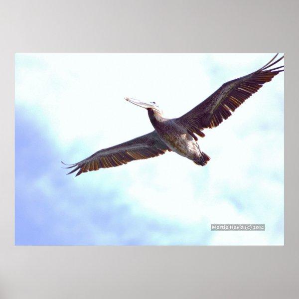 Pelican Soars