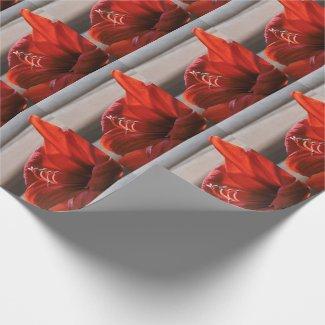 Striking Red Lion Amaryllis Flower Wrapping Paper