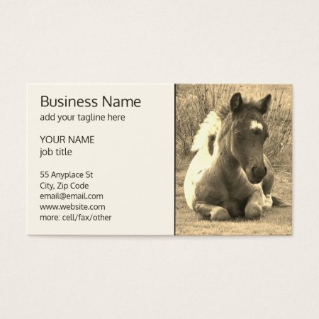 Cute Yearling Foal Sepia Photo Horse Breeder Business Cards Template