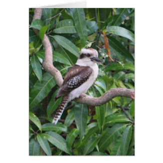 Laughing Kookaburra Greeting Card