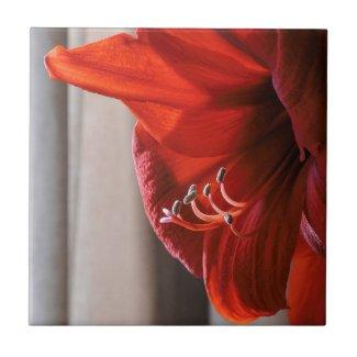 Striking Red Lion Amaryllis Flower Tile