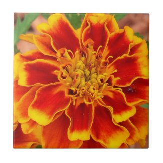 Marigold, annual tile