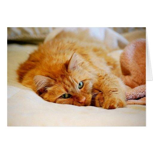 Birthday Orange Cat: Sweet Orange Cat Greeting Cards