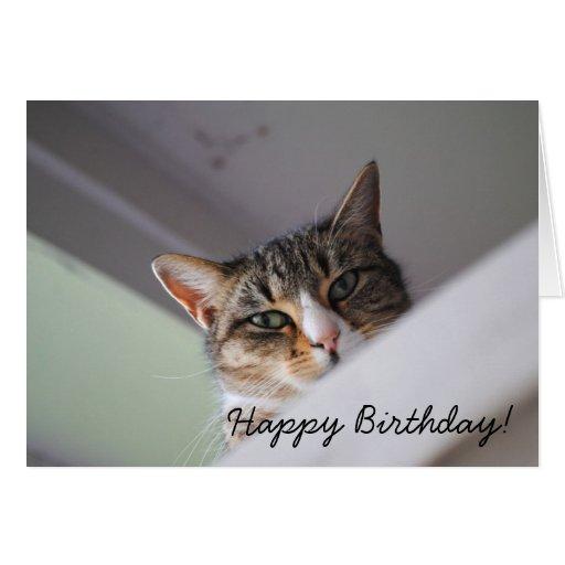 Birthday Orange Cat: Sweet Tabby Cat Happy Birthday Card