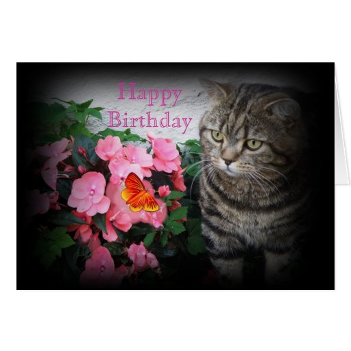 Birthday Orange Cat: Tabby Cat Birthday Card