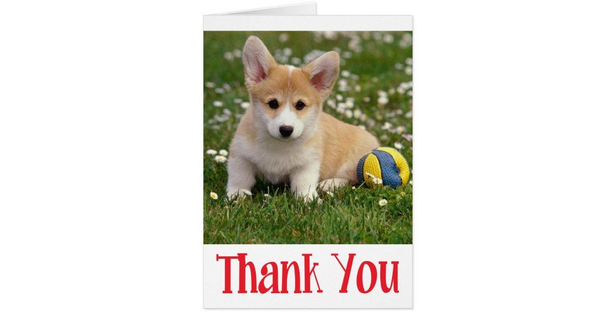 Cute Dogs Postcard, Illustrated Postcards, Animal ...  Thank You Cute Corgi Puppy