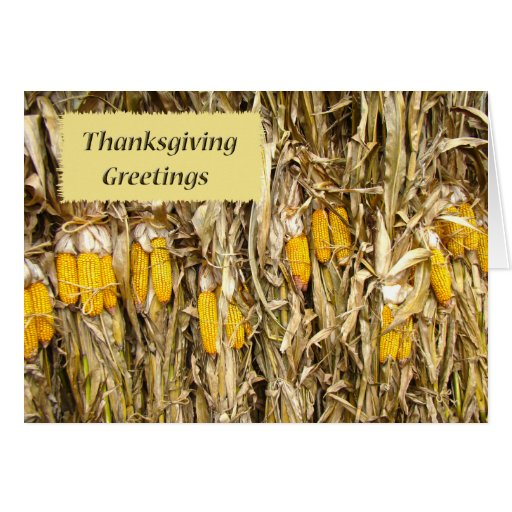 Corn Stalk Decoration Ideas: Thanksgiving Dried Corn Stalk Decorations Card