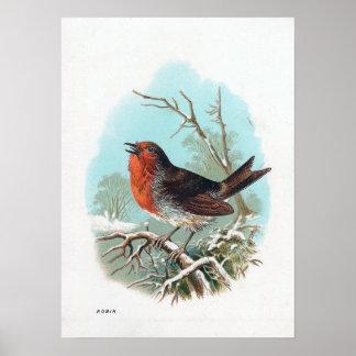 Robin Bird Posters | Zazzle