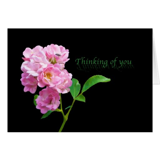 Thinking of You, Pink Garden Roses on Black Card | Zazzle