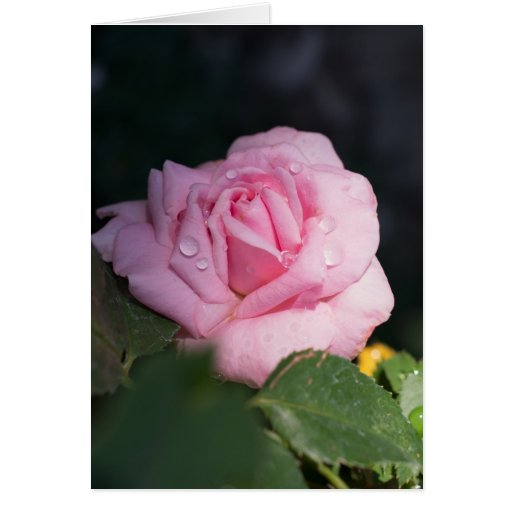 Thinking of You - Pink Rose Greeting Card | Zazzle