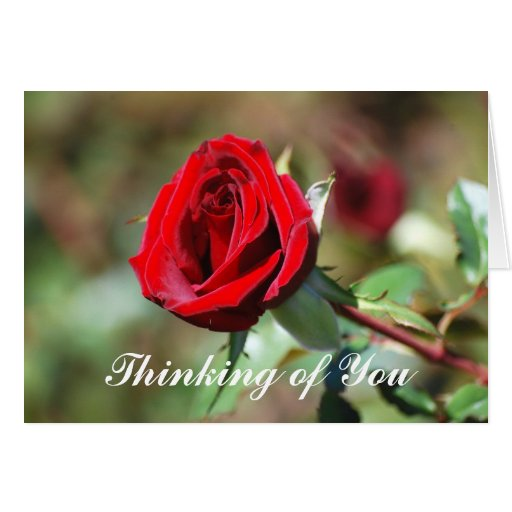 Thinking of You Romantic Red Rose Card | Zazzle