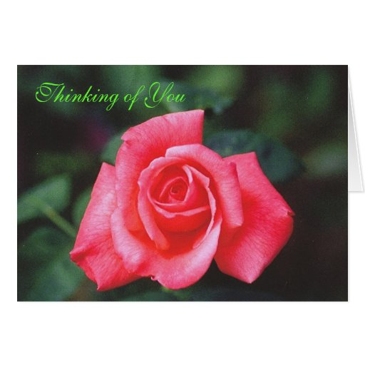 Thinking of You Rose Greeting Card | Zazzle