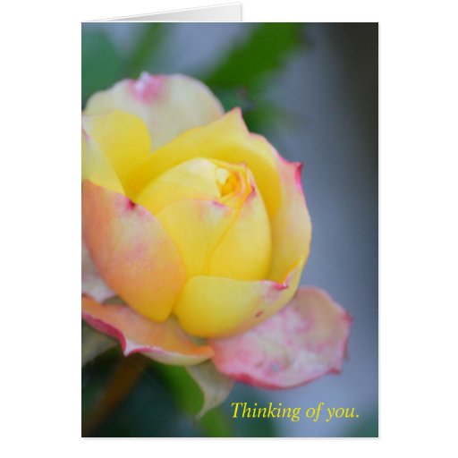 Thinking of you. Yellow rose. Note or greeting. Card | Zazzle