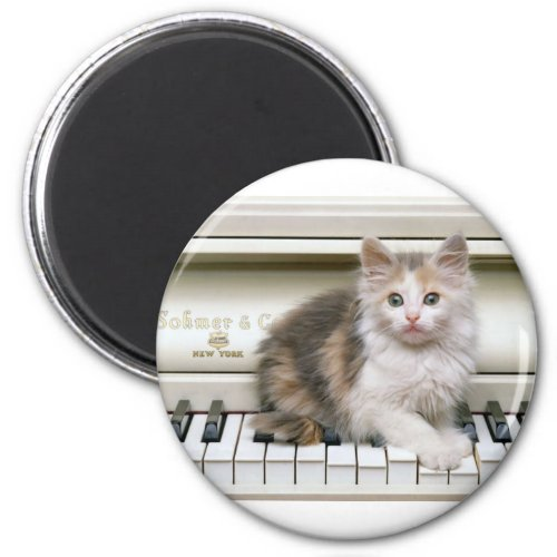 Tickling the Ivorys Kitten Round Magnet